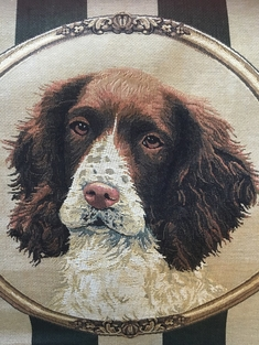 KUDDE - ENGLISH SPRINGER SPANIEL